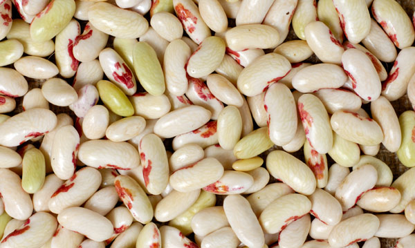 white-beas